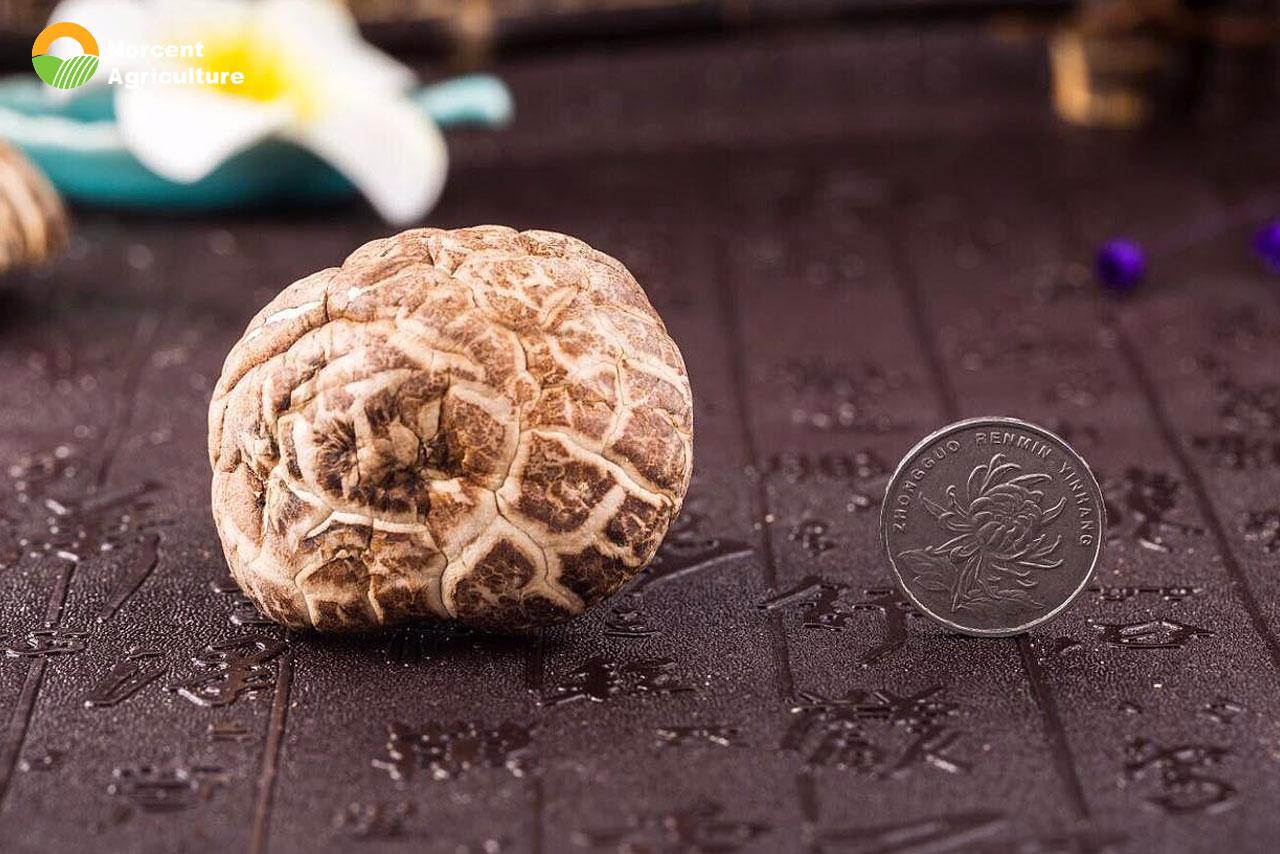 how to choose shiitake mushroom