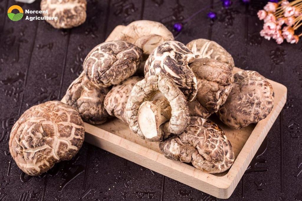 China dried shiitake mushrooms suppliers