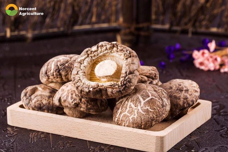 Dry Shiitake Mushroom supplier